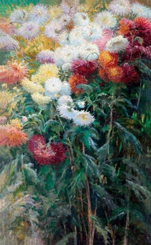 Chrysanthemums in the garden